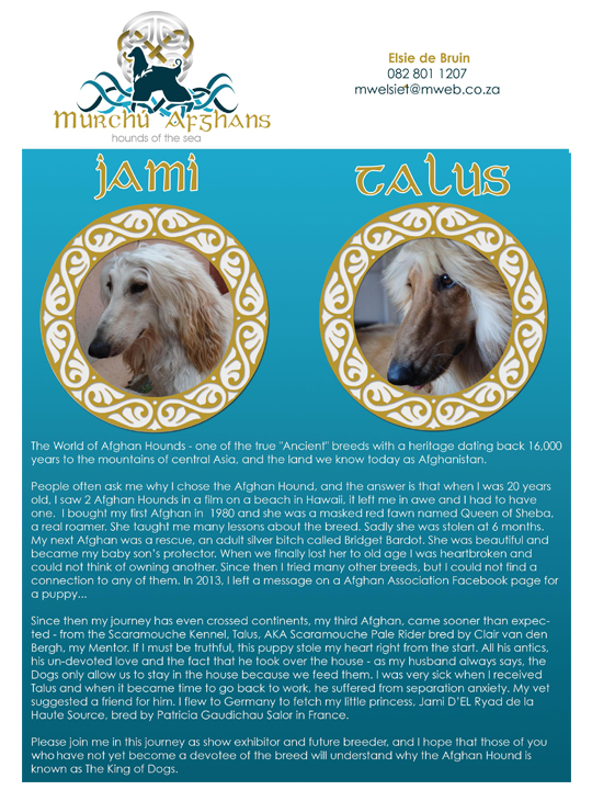 Afghan Hound Association of Southern Africa – An afghan